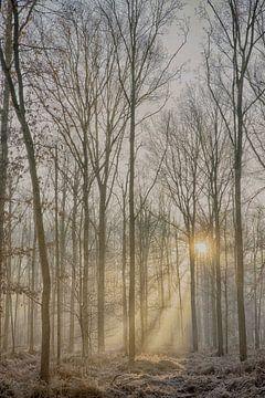 Mist in het bos van Egon Zitter