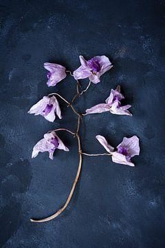 Botanisches dunkles Stillleben, getrocknete Orchidee von Joske Kempink