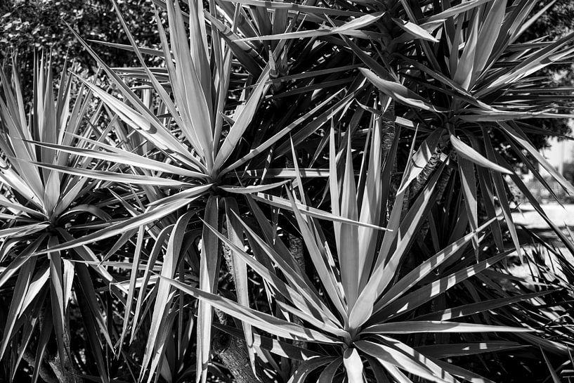Botanische palmen |  Zwart-wit | Natuur | Reisfotografie art print van Monique Tekstra-van Lochem