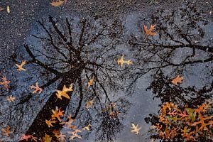 Herfstspiegel van Marc Wielaert