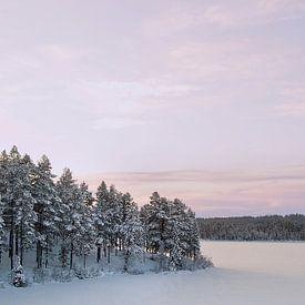 Winterlicht II von Aline van Weert