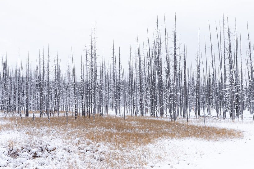 Spikes and grasses Yellowstone van Sjaak den Breeje