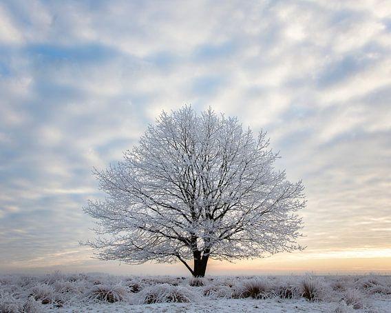 Wintereik van Tony Ruiter