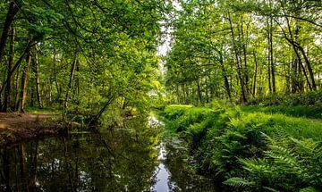 Bosrijk plaatje van Patricia van Loock