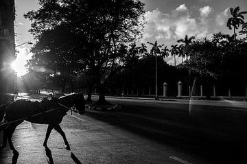 Paard in Havana von Annemarie Winkelhagen