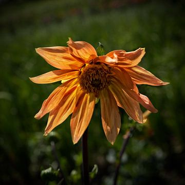 Vergeten bloem van Esther Swaager ( Studio Toet)