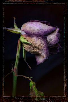 Alte Blumen 19 von Henk Leijen