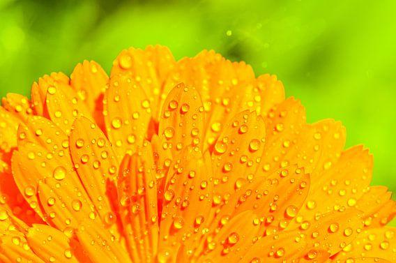 Orange Water Druppels Pt II