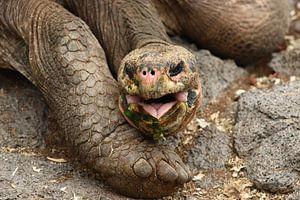 Galápagosreuzenschildpad von