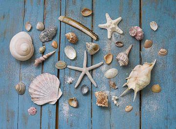 schelpen van Odette Kleeblatt