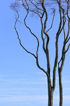 alter kahler Baum mit gebogenen Ästen gegen den blauen Himmel, Kopierraum von Maren Winter