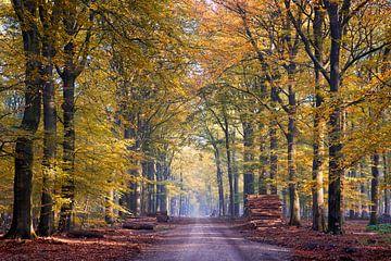 Goldener Feldweg im Wald bei Hoog Soeren auf der Veluwe von Cor de Hamer