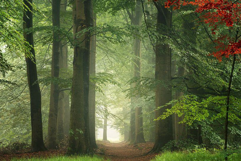 Regen in een bos van Martin Podt