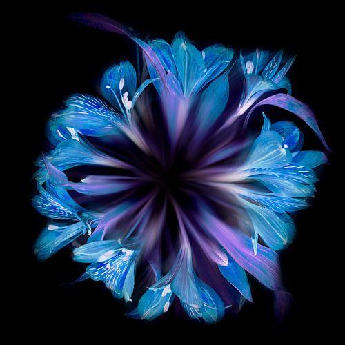 Bloemencirkel in blauw