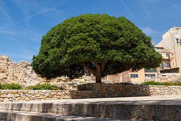 Beeindruckender Baum von Robin Velderman