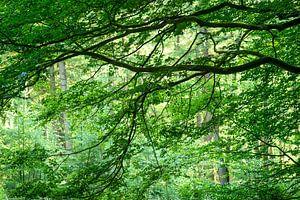 bos in de zomer van