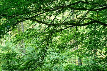 bos in de zomer van Hanneke Luit