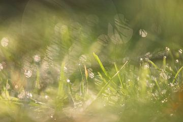 Glitzern im Gras von Tania Perneel
