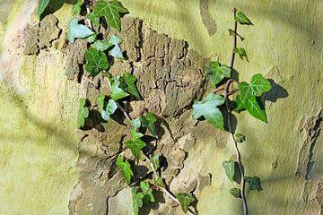 Bladerkunst op de boomstam origineel van Ronald Smits