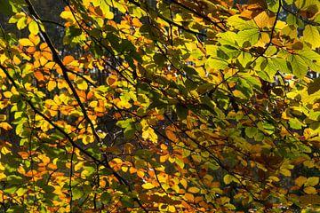herfst14 von Geertjan Plooijer