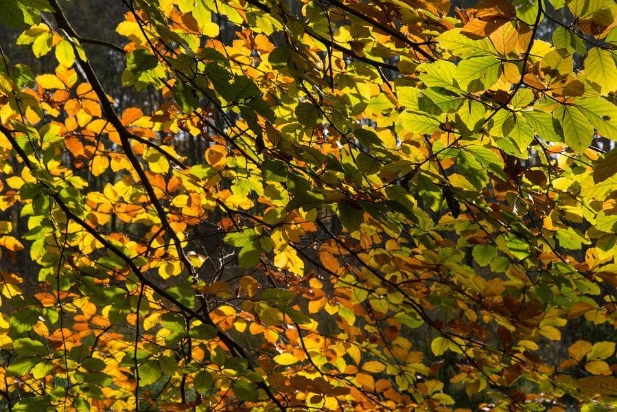herfst14 van Geertjan Plooijer
