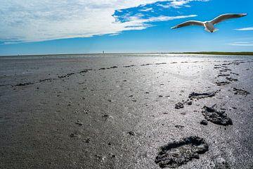 Voetsporen in het wad aan de Noordzeekust van Animaflora PicsStock