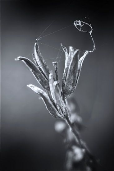 Fading Nature 5 van Pieter van Roijen