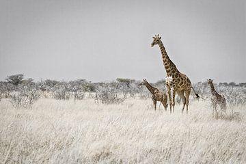 Giraffenmoeder met twee kalveren van Jan Schuler