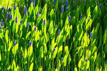 Blume, Licht und Schatten von Peter Leenen