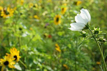 de witte bloem van Angelique Rademakers
