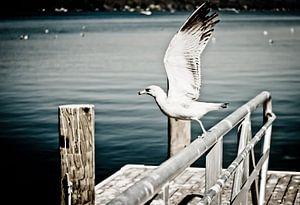 Watervogel op hek