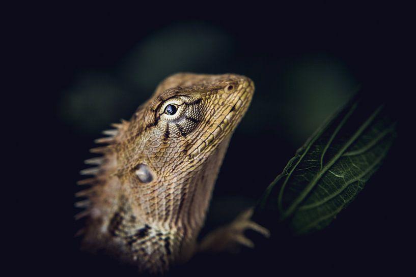Young iguana van MR OPPX