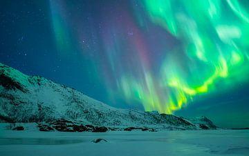 Noorderlicht in de nachtelijke hemel boven de Lofoten eilanden van Sjoerd van der Wal