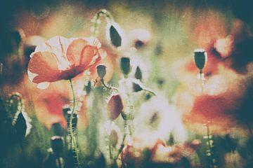Poppy art van Francois Debets