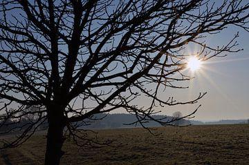 Morgensonne von Sandra Knittel