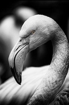Flamingo op zwart achtergrond van Ron Meijer