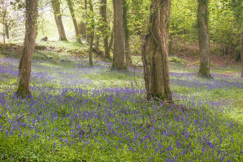 Bluebell wood van Irene Hoekstra