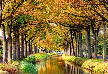 Bomenrij langs water van Franke de Jong