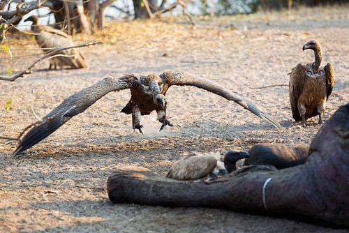 Vliegende Gier op weg naar lunch