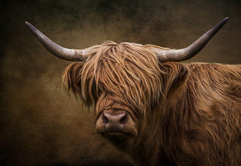 De Schotse hooglander van Bert Hooijer