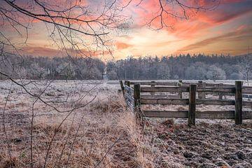 Matin froid avec soleil levant, clôture sur Miranda Heemskerk