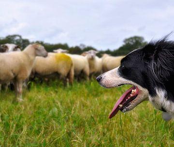 De schapenhoeder van Anouschka Hendriks