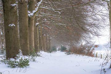Forest Lane im Winter von Eelke Brandsma