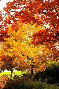 schöne Herbstbäume von Annemarie Kroon