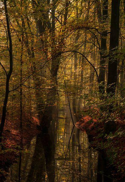 De kleine Amazone van Joris Pannemans - Loris Photography