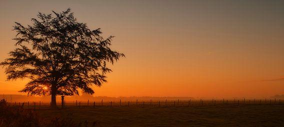 Zonsopkomst achter de boom. van Ellen Driesse