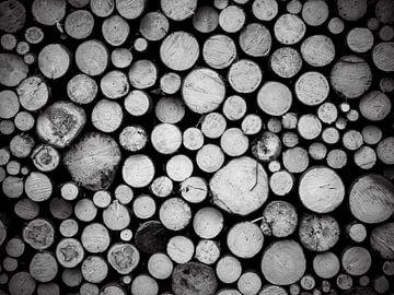 Holz von Alexander Dorn