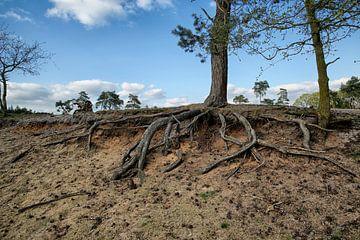 Nationaal Park De Maasduinen van Jan Sportel Photography