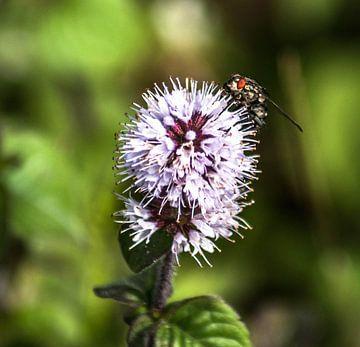 Blossom van Thomas Depauw