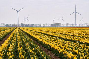 Tulpenbollenveld met windmolens van Ad Jekel